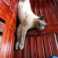 做猫其实挺幸福的~