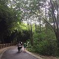 大熊猫+小熊猫