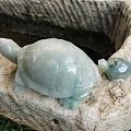 龟龟实在是太可爱了😊萌到了萌到了🤩🤩🤩