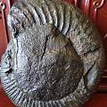 说是海螺化石,拿来当摆件😃😃