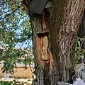 那树、那蜂、那曾经的岁月 还有村口那头悠闲的驴……