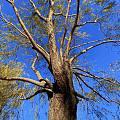 一棵枝桠分叉很多的树