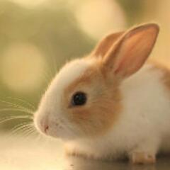 兔子和钻石