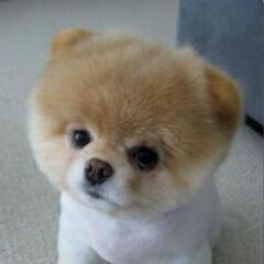 小白是狗王。