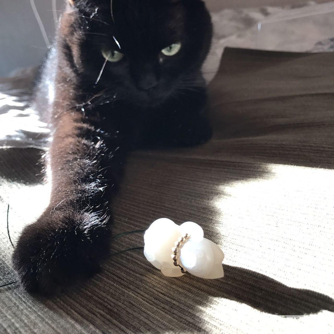hi,我是小黑_猫