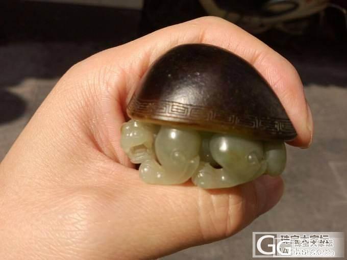 上海积玉堂:乌黑乌黑的皮色美龙龟来了。。。_传统玉石