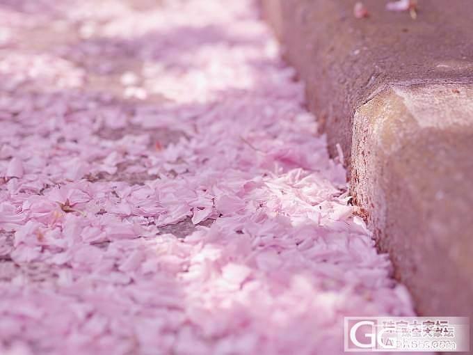 喜欢樱花瓣在空中翩翩纷飞的样子,如今我把它们拾起,与大家分享_舒俱来