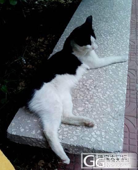 今天下午发生一件事把我给气蒙了,一个五大三粗的汉子你欺负流浪猫算是本事?_闲聊