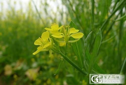 春暖花开_观花植物摄影