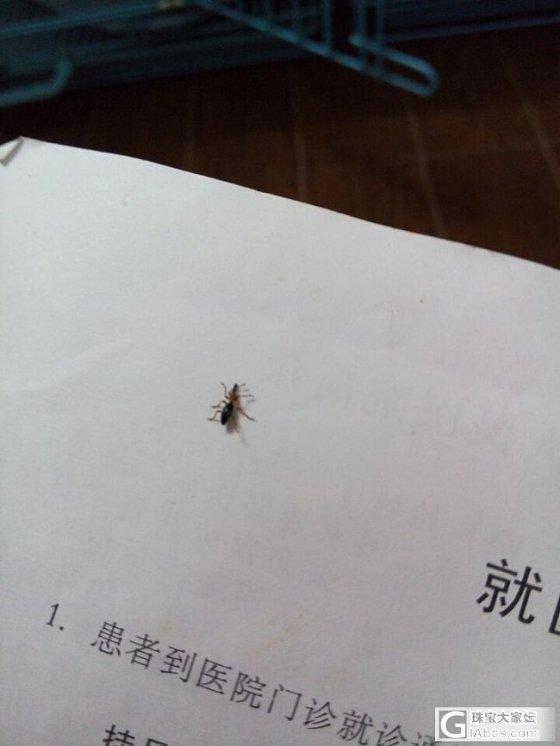 请问有没有知道这是什么虫子_闲聊