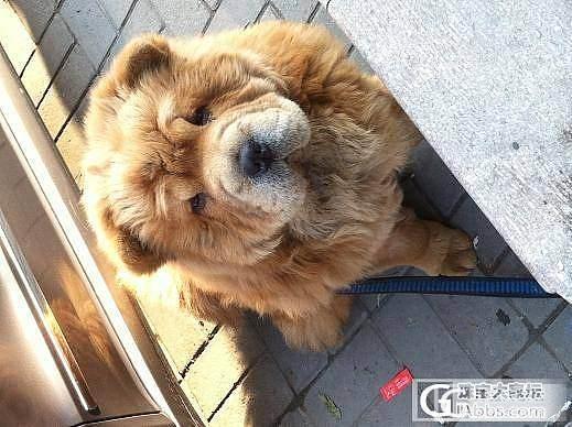 正阳光下~~晒晒更健康_宠物