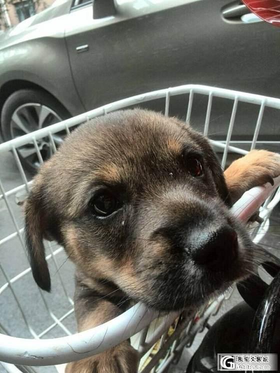 老公捡回的流浪狗_宠物