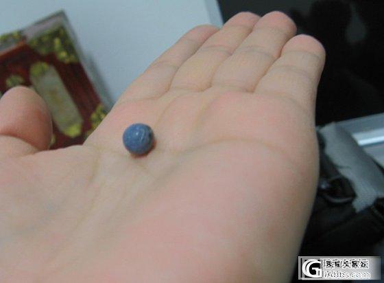 这是啥?蓝珊瑚?_珊瑚