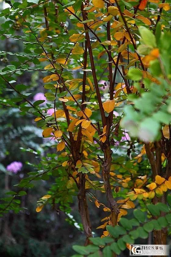 应个景!秋季一组闲片_观花植物摄影