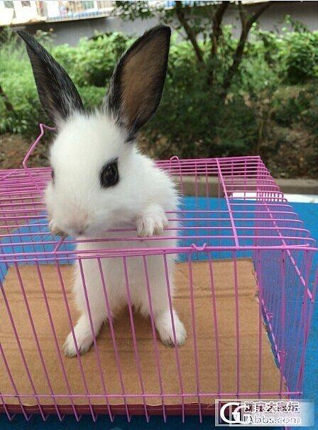 生生我的最爱还有一只超萌的小兔子哦_兔戒指金