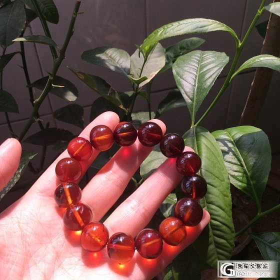 缅甸琥珀也是不错的选择_有机宝石