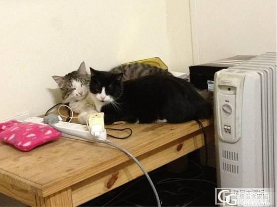 好吧,我来发一个07年整的许家的镯子加两只我在南非养的肥猫,哈哈_手镯猫银