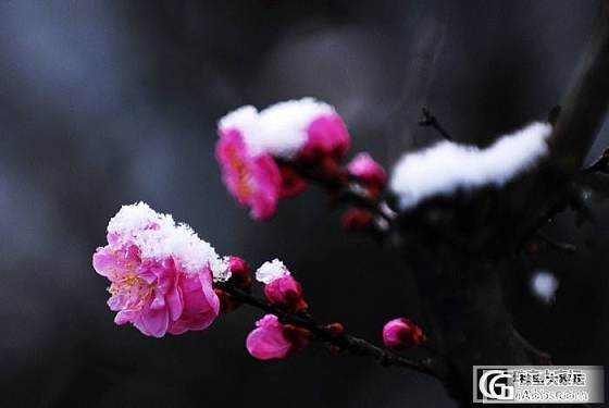 寿山石雕之----窗外寒梅(幽谷原创作品)_牌子寿山石印石