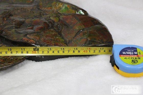 年龄过亿 加拿大斑彩石 彩斑菊石 斑彩石化石_珠宝