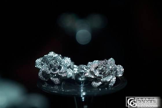欢迎来到钻石动物园--我最珍爱的花朵,豹子,还有TOUS小熊。_钻石