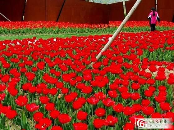 上海--春色_上海摄影
