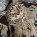 与毛毯完美融为一体的猫腿子~