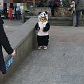 """昨天早上路上看到的""""熊猫""""北鼻~"""