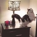 猫床买得好,主子上床早 