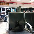 遇到黑猫警长