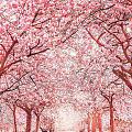 London in Blossom 【花开伦敦】