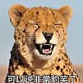 看鉴宝节目,原来古玩界非常鄙视日本