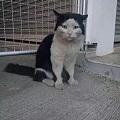 听说一只猫离家出走(挖煤去了)又自己回来。体验了人生的艰苦
