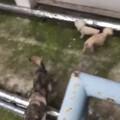 家里的四只丑狗