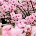 春天花会开