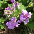 春暖花开,草长莺飞的季节~