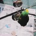 我是一只小小小鸟......