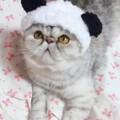(´-ω-`)熊猫版珍珠