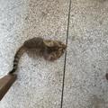 值班的周六,办公室来了一只小奶猫