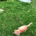 碰瓷的猫妈一家