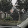 上海第一场瓢泼大。。。雪