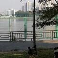 今早散步狗子发现只野猫 给人家吓得哈哈哈哈 (半废弃的那种沿江公园所以没有牵...