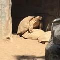 动物园的车