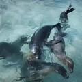 很想做一只海狮呀