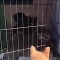 第一次看到斗鸡,狗子好兴奋