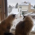 看雪花飘落的两个宝