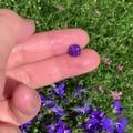 这颗紫蓝宝是什么神仙颜值