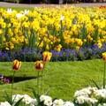 小花园挺美的😎