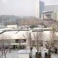 后知后觉,昨天看雪今天发图