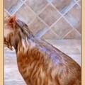 洗澡很乖的猫,不怕水😄